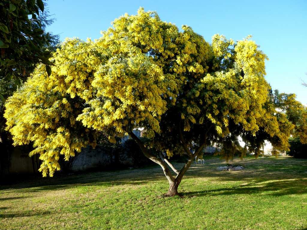 Life invasep for Arboles frutales para el jardin